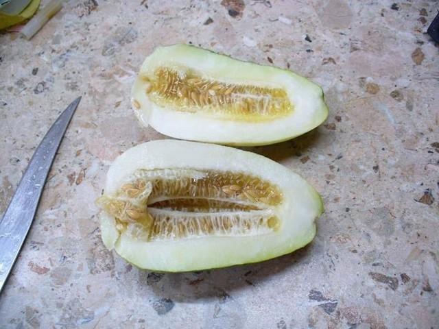 Об огурдыне: выращивание огурца со вкусом дыни, правила посадки и ухода