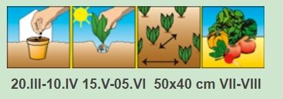 Об огурце Фараон: описание сорта, характеристики, технология выращивания