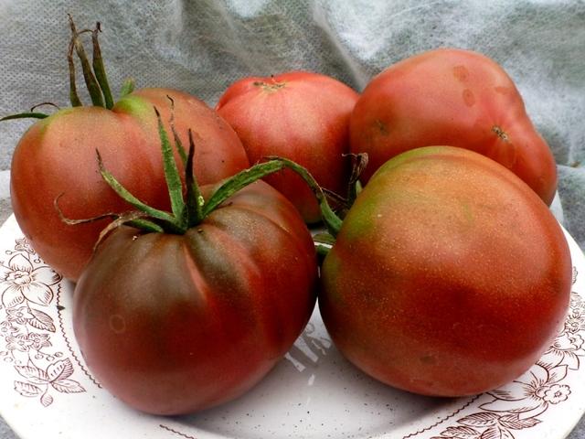 О томате Черномор: описание сорта, характеристики помидоров, посев