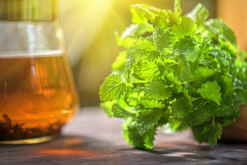 Чем отличается мята от мелиссы: в чем разница между растениями, чем пахнут
