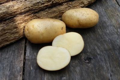 Эльмундо: описание семенного сорта картофеля, характеристики, агротехника
