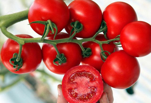 О томате Киржач: описание сорта томата, характеристики помидоров, посев