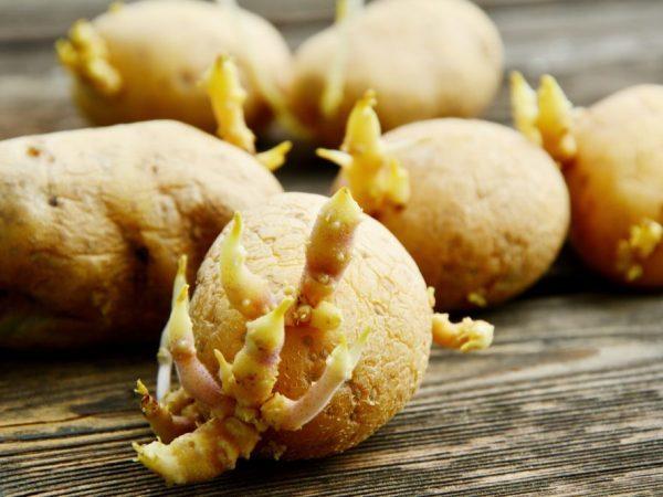 Аризона: описание семенного сорта картофеля, характеристики, агротехника