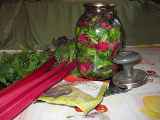О листовой свекле Мангольд: описание сорта, как выращивать и ухаживать