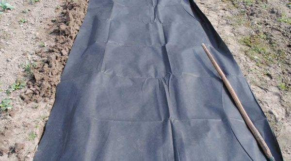 Как посадить дыню в открытый грунт: посев семенами и уход, почва и полив