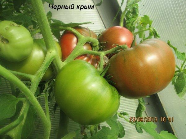 Все о томате Черный Крым: как выглядит, характеристики и описание сорт