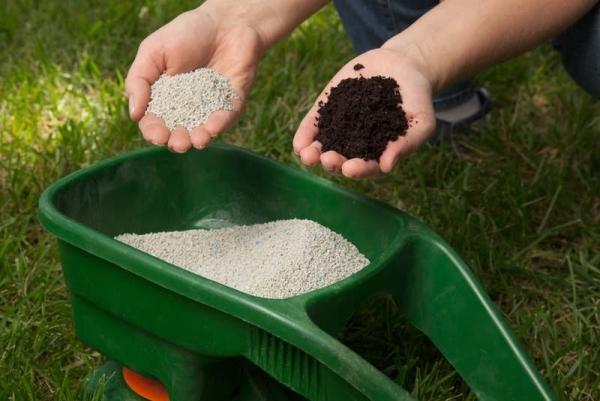 Как сажать ежевику весной: садовая посадка в открытый грунт и уход за саженцами