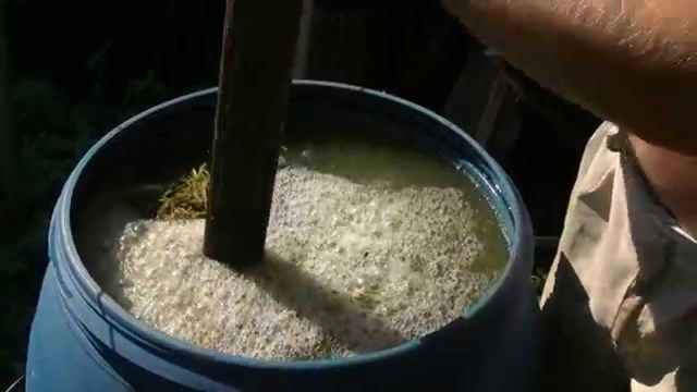Об огурце Амур: описание сорта, характеристики, технология выращивания