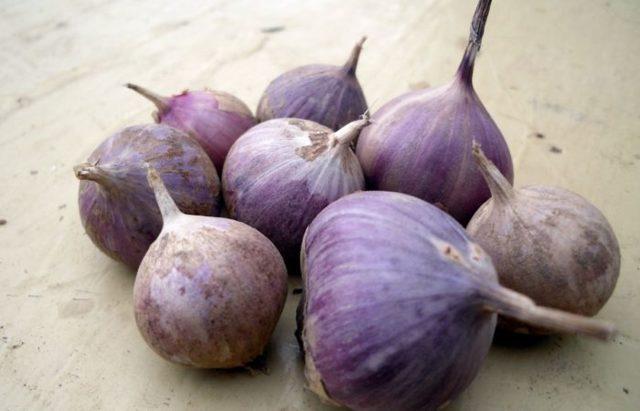 Все о посадке бульбочек чеснока весной: способ выращивания из бульбочек