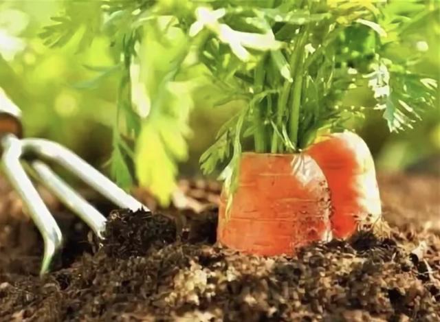 Посев моркови в открытый грунт весной, как и когда нужно сеять семена