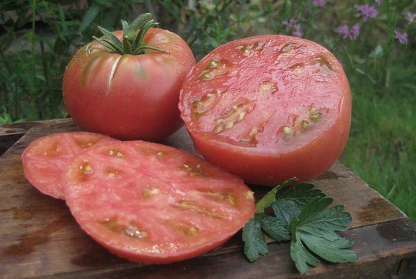 О томате Микадо: описание и характеристики сорта, уход и выращивание
