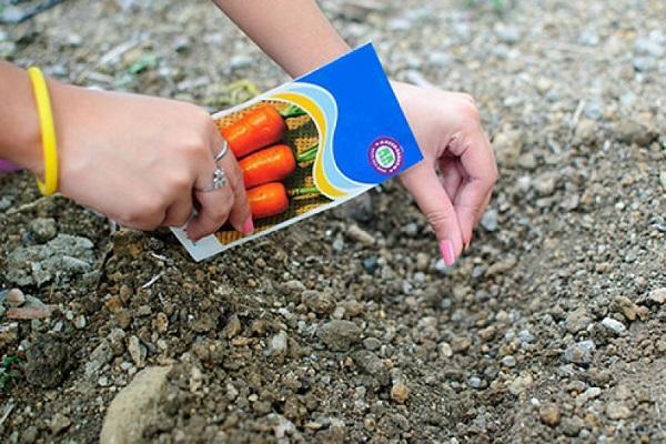 Через сколько дней всходит морковь, как ускорить всхожесть, сроки