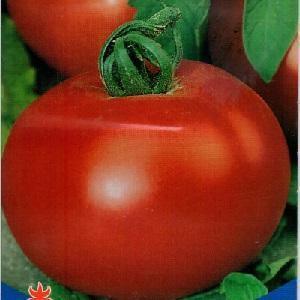 Добрый: описание сорта томата, характеристики помидоров, посев