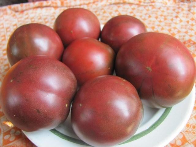 Цыган: описание сорта томата, характеристики помидоров, посев