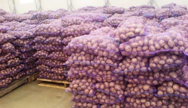 Ирбитский: описание сорта картофеля, характеристики, агротехника