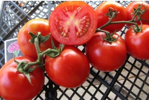 Сладкий миллион: описание сорта томата, характеристики помидоров, посев