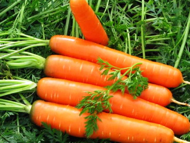 Благоприятные дни для посева моркови, когда лучше сажать морковь