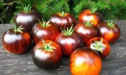 Мажор: описание сорта томата, характеристики помидоров, выращивание