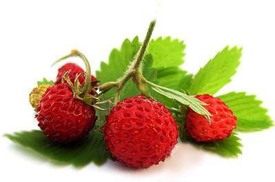 Все о клубнике: что это, ягода, состав, полезные свойства, противопоказания