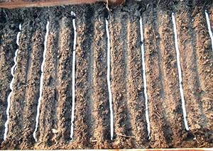 Как посадить морковь в открытый грунт, чтобы не прореживать грядки
