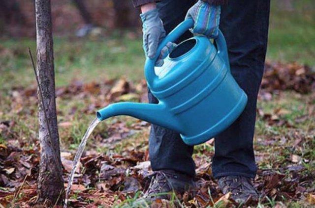 О вишне Ночка: описание и характеристики сорта, уход и выращивание