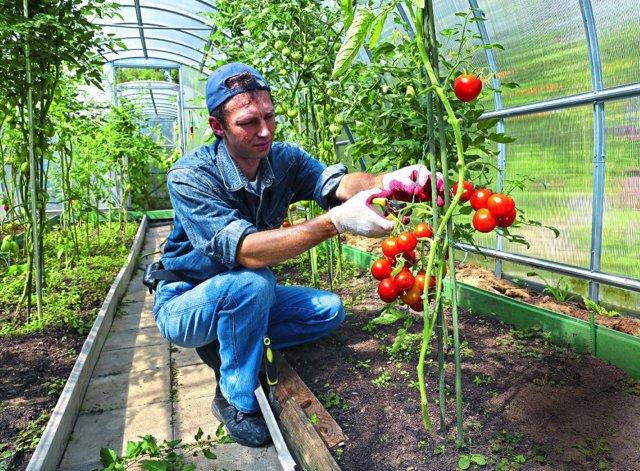 Богата хата: описание сорта томата, характеристики помидоров, посев