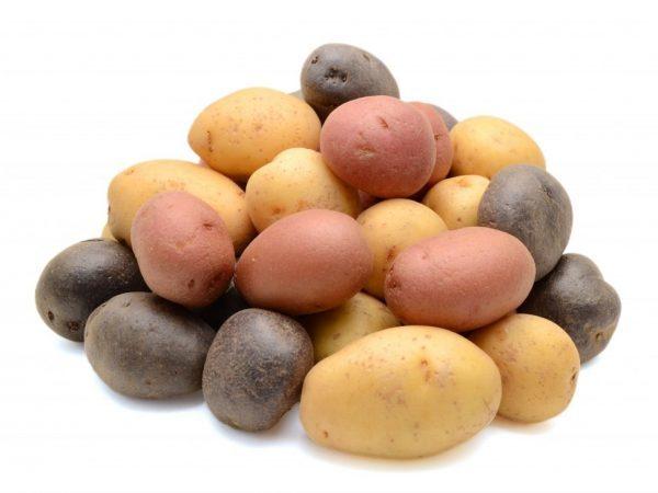 О картофеле Элита: описание семенного сорта, характеристики, агротехника