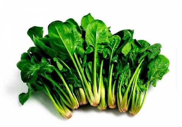 Как вырастить шпинат : посев и уход за растением, условия для хорошего роста