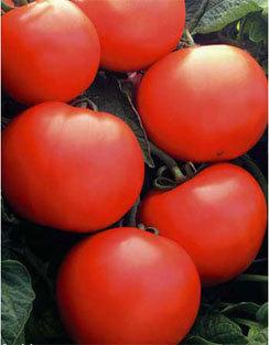 Дебют: описание сорта томата, характеристики помидоров, посев