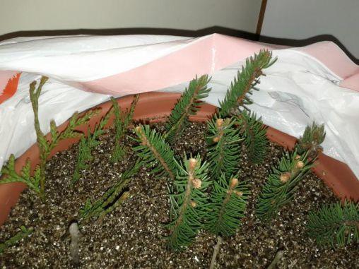 Посадка саженцев весной в Подмосковье, как правильно сажать и подкармливать