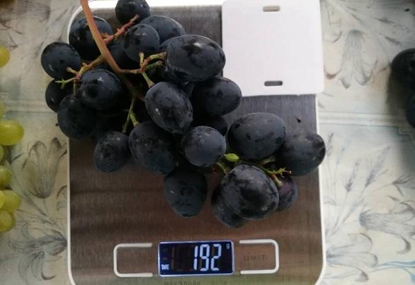 Описание винограда сорта Руслан: основные характеристики и особенности