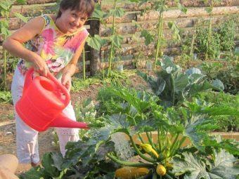 О кабачках и патиссонах: можно ли посадить культуры рядом на одной грядке