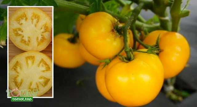 Томат Томск: описание сорта томата, характеристики помидоров, посев