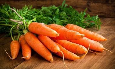 Лучшие сорта моркови для посадки и хранения на зиму, для черноземья
