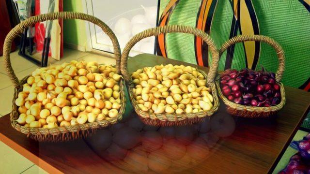 Все о сорте лука Штутгартер: посадка и уход, особенности выращивания