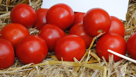 О томате Соседская зависть: описание сорта, характеристики помидоров, посев