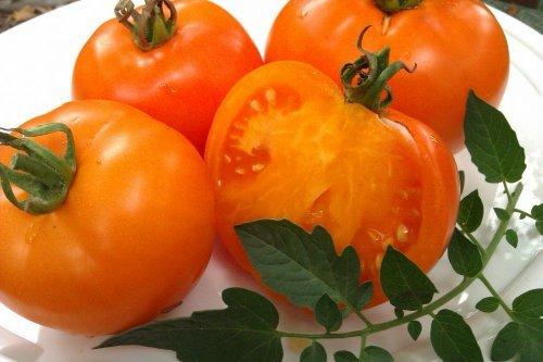 Оранжевый слон: описание сорта томата, характеристики помидоров, посев