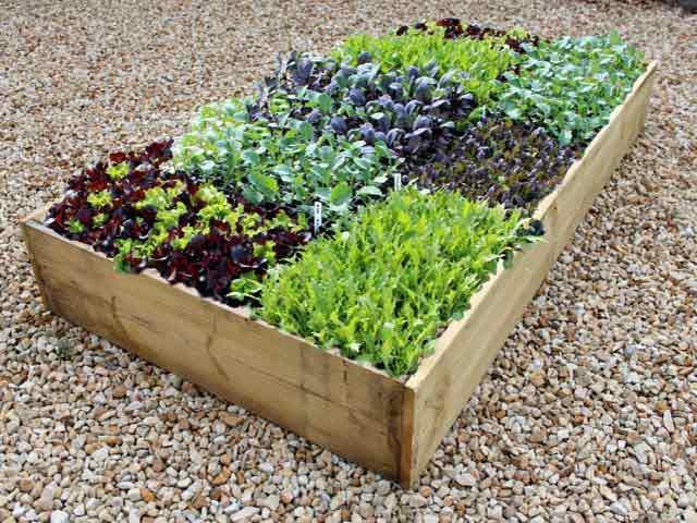 С чем сажать базилик на одной грядке: соседство с другими растениями