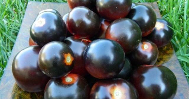 О томате Черный принц: описание и характеристики сорта, уход и выращивание