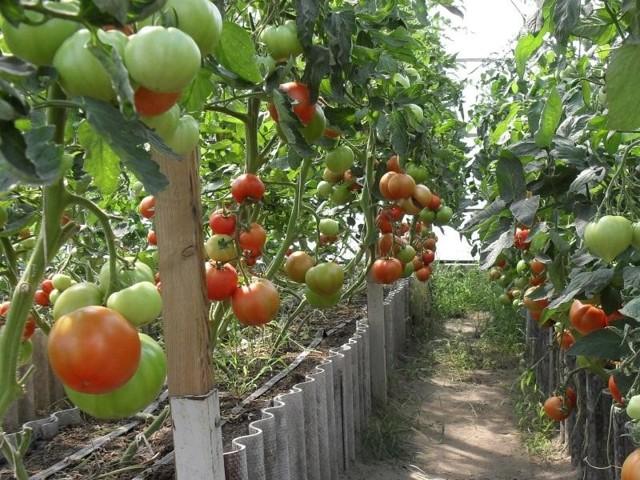 Биг Биф: описание сорта томата, характеристики помидоров, посев