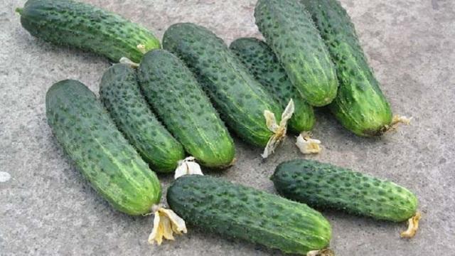 Об огурцах для Урала, выращиваемых в теплице: лучшие сорта для посадки