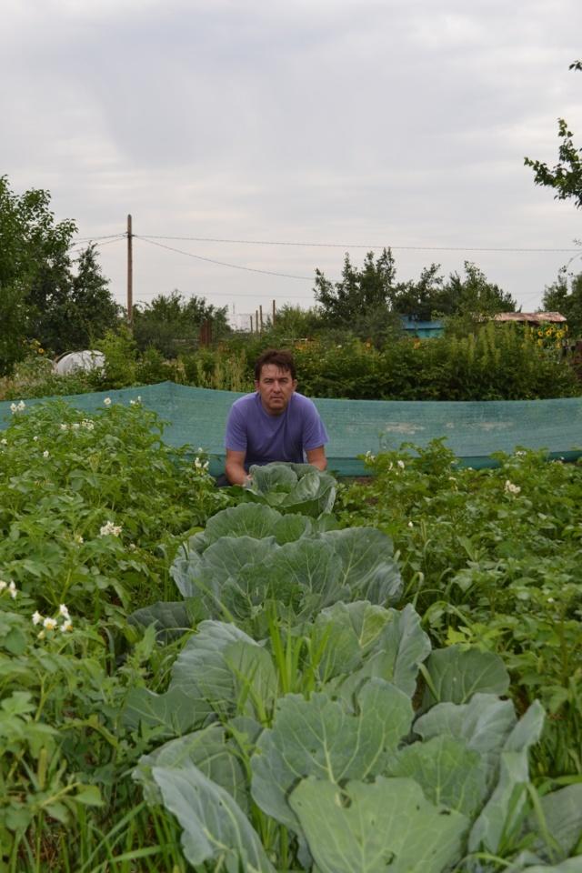Что можно сажать рядом с картофелем, можно ли сажать капусту с картошкой