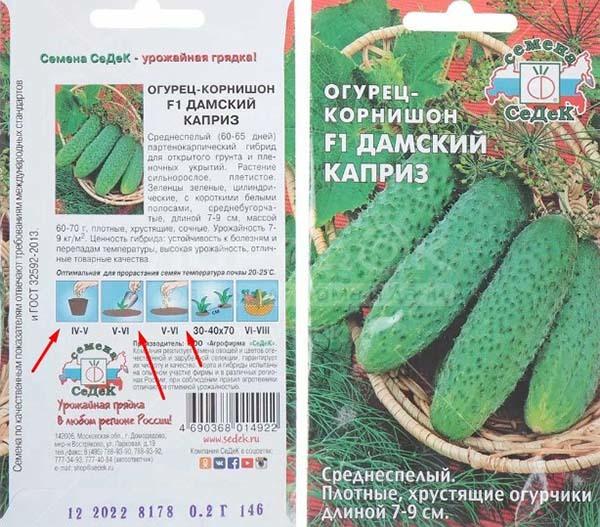 Когда высаживать на рассаду огурцы на Урале: сроки сеяния, посадка