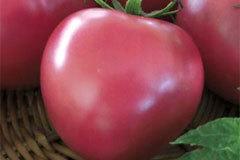 О томате Розовый фламинго: характеристики сорта, уход и выращивание