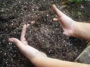 О калийных удобрениях для огурцов: чего не хватает культуре, чем подкормить