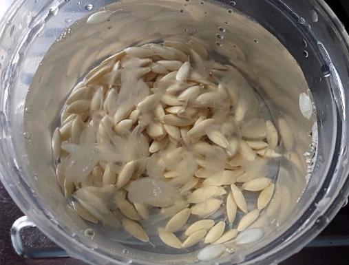Правильная посадка огурцов семенами: на какую глубину сажать семечко