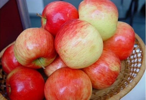 О яблоне Беркутовское: описание сорта, характеристики, агротехника, выращивание