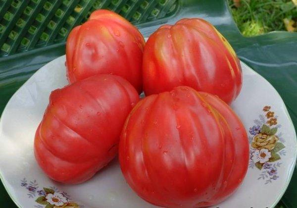 Инжир: описание сорта томата, характеристики помидоров, выращивание