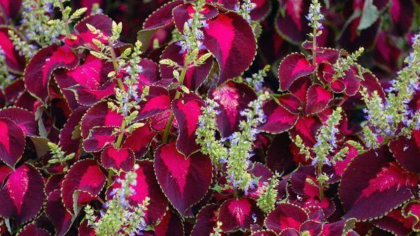Все о крапиве: как выглядит, где растет, распространенные сорта