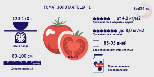 О томате Золотая теща: описание сорта, характеристики помидоров, посев